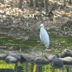 Nice 'wildlife' roamed around the grounds