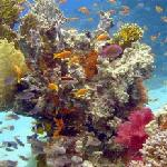 hurgada red sea coral reefs