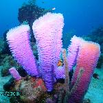 beautiful colors under the sea!