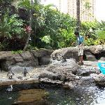 Penguins and turtles pool
