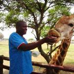 Our guide, Pastor feeding a giraffe at the Lion Park