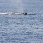 Our first whale sighting :-)