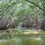 Going through the Mangroves