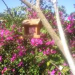 Angolo del giardino con casetta per uccellini