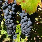 Trefethen Vineyards