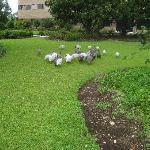 Flock of birds at Hotel