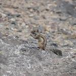 scoiattoli in spiaggia
