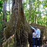 Mahogony Tree - Scale!