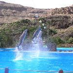 Шоу дельфинов в Палмитос Парк