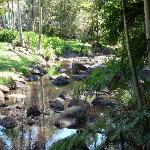 Creek running through the backyard
