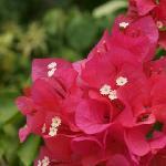 亜熱帯の美しい花々
