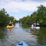 Paddling thru the mangroves