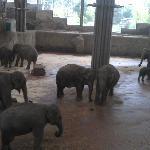 Elefanten im Kölner Zoo innen