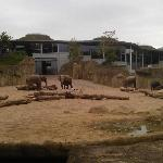 Elefanten im Kölner Zoo aussen