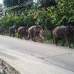 elephants one the way home
