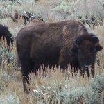 Photo de Grizzly Country Wildlife Adventures