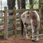 Pony posed for us.