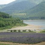 かなやま湖畔ラベンダー畑