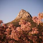 View over the syringa tree of Lion's Head from the deck