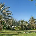 9. Beautiful garden at Kibbutz Kalya!