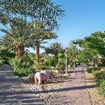 10. Beautiful garden at Kibbutz Kalya.