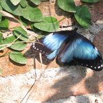 Photo de Biocentro Guembe Mariposario