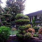 il giardino vicino alla piscina