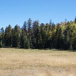 Hannagan meadow across the road