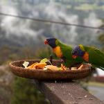 Rainbow Lorikeets join us for breakfast