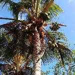 Palmtrees and growth everywhere