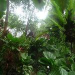 Fast im Dschungel