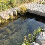 Clear water in the village