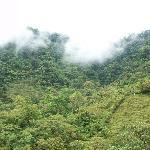 Ardecer con bosque nuboso