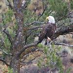 eagle snake river