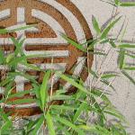 Front Garden Bamboo
