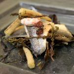 fillet of seabass