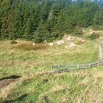 Property hiking trail