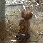 uno scoiattolo sotto la finestra della camera da letto