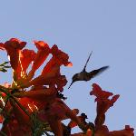 Enjoy the Hummingbirds on the patio!