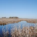 Prime Hook National Wildlife Refuge Foto