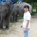 Opportunities With Elephants