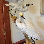 Egrets sculpted from wood, beautiful display