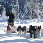 White Wilderness Sled Dog Adventures - Day Tours