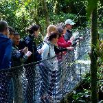 Guides tour at Suspension Bridges