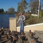 Feeding the Ducks at Lakeside October 2012