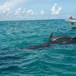 Delphins @ Sian Ka'an