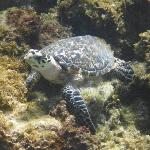 Turtle we saw while snorkeling