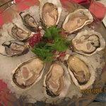 Oysters varieties