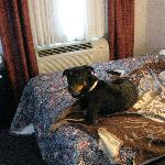 dog in room