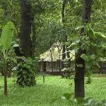 Foto de Dudhsagar Spa Resort